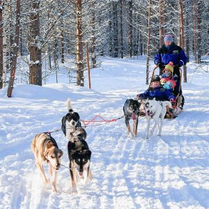 dog sledding in Mont Tremblant, Tremblant activities